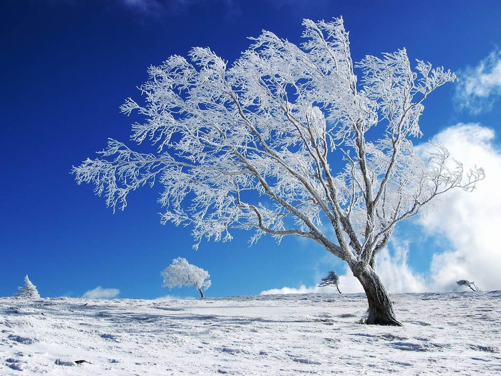 The-best-top-winter-desktop-wallpapers-7