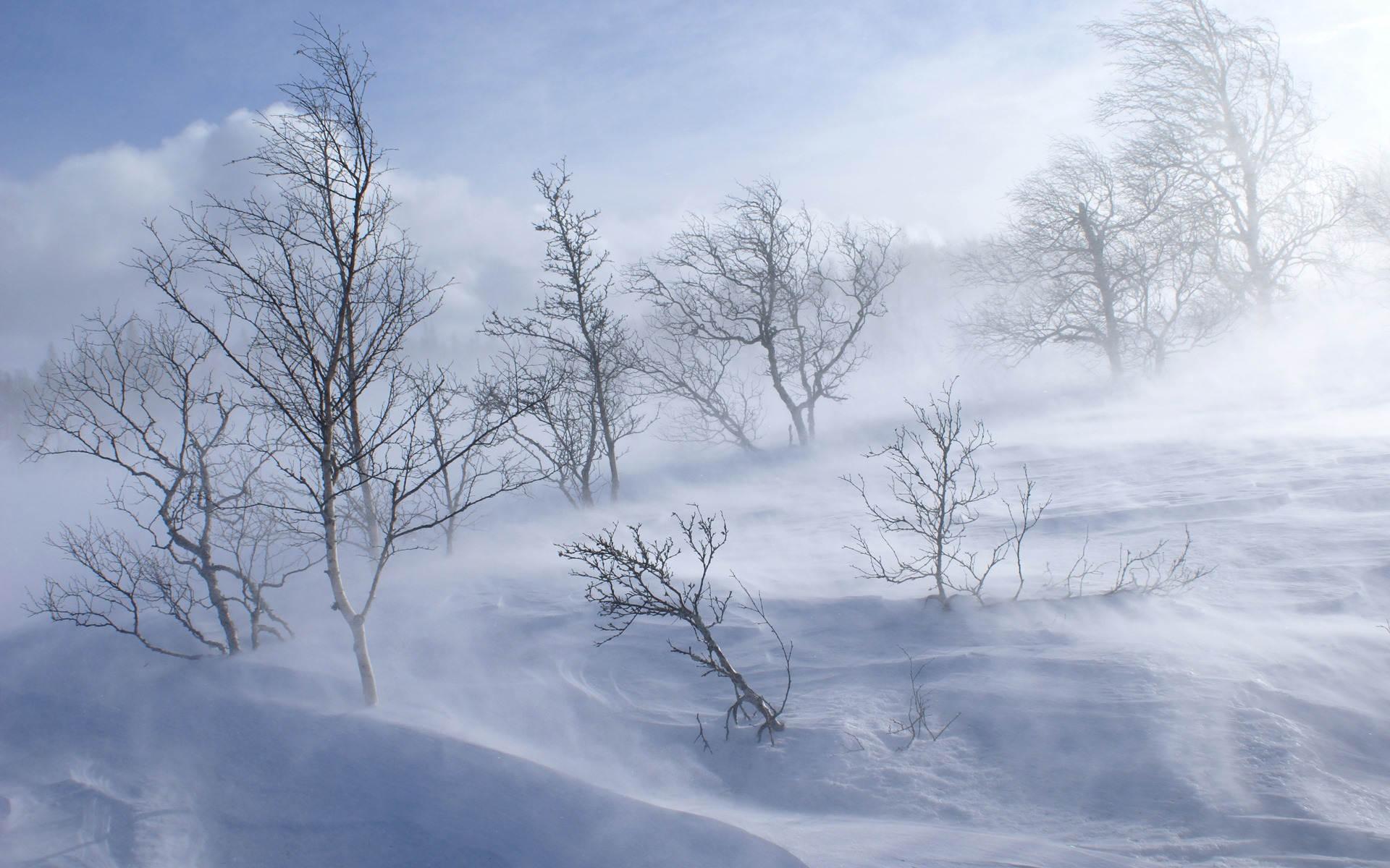 Winter-Storm-Wallpaper-2