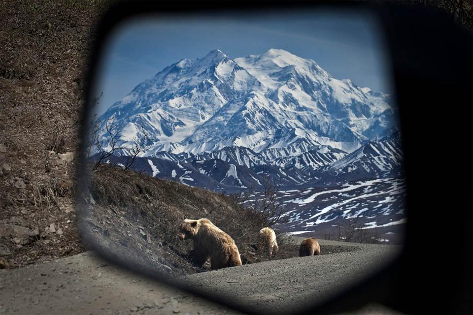 Семья медведей в зеркале заднего вида. Фото: Jacob W. Frank