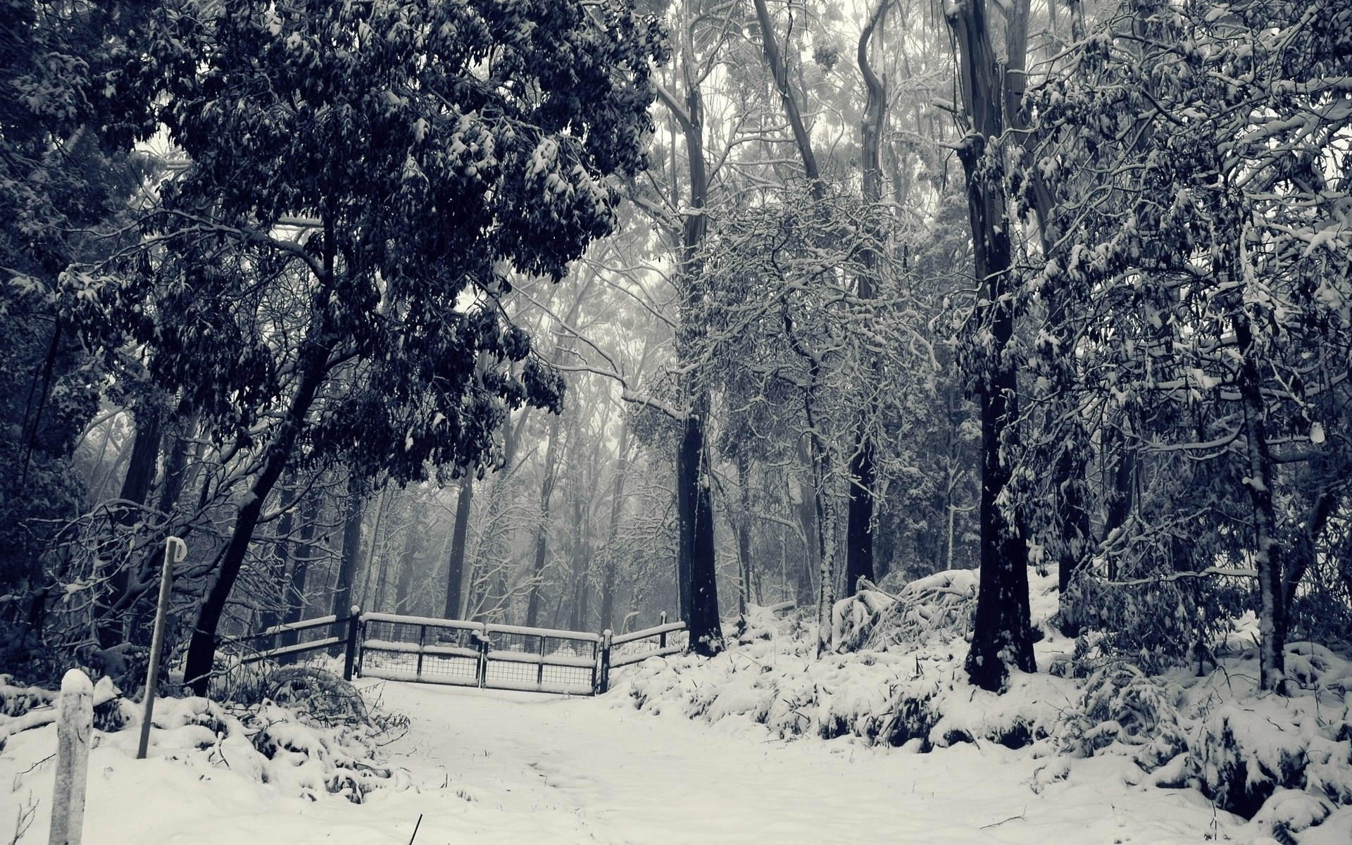christmas-winter-wonderland-backgroundwinter-wonderland-wallpapers---full-hd-wallpaper-search-agmfwnaj