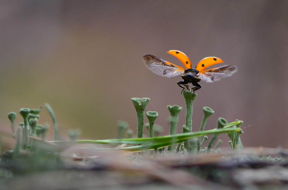 lady-bug-taking-off