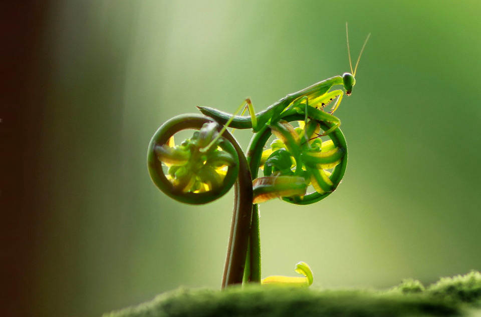 mantis-on-natural-bike