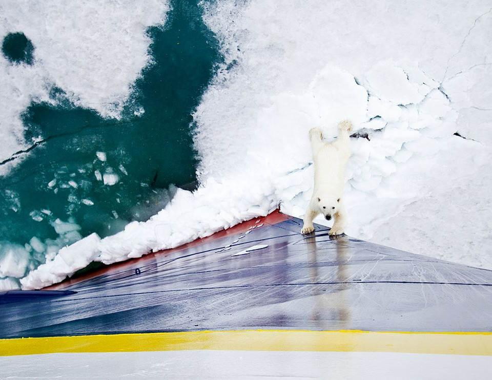 Белый медведь встречает ледокол. Фотография: Майкл Нолан (Michael Nolan) | National Geographic