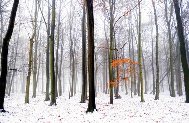 Ashridge in the snow