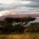 Фотограф дикой природы Marina Cano