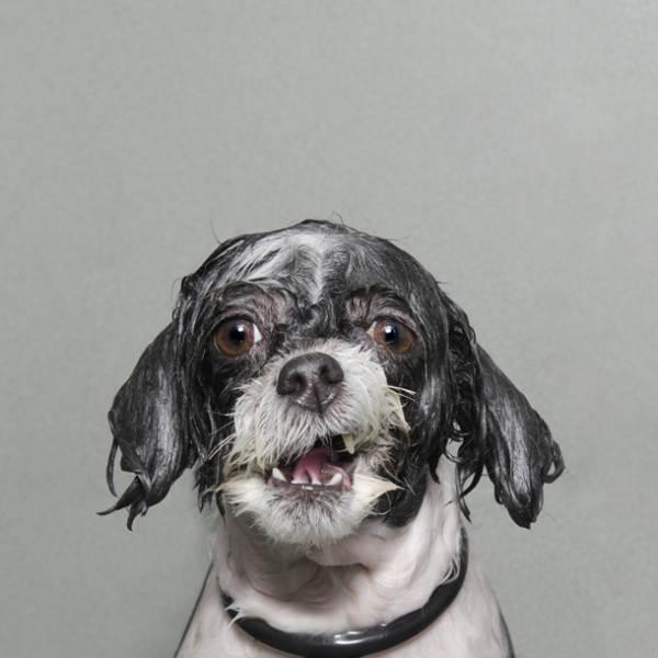 Wet Dog 02