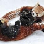Животные и снег. Фотографии