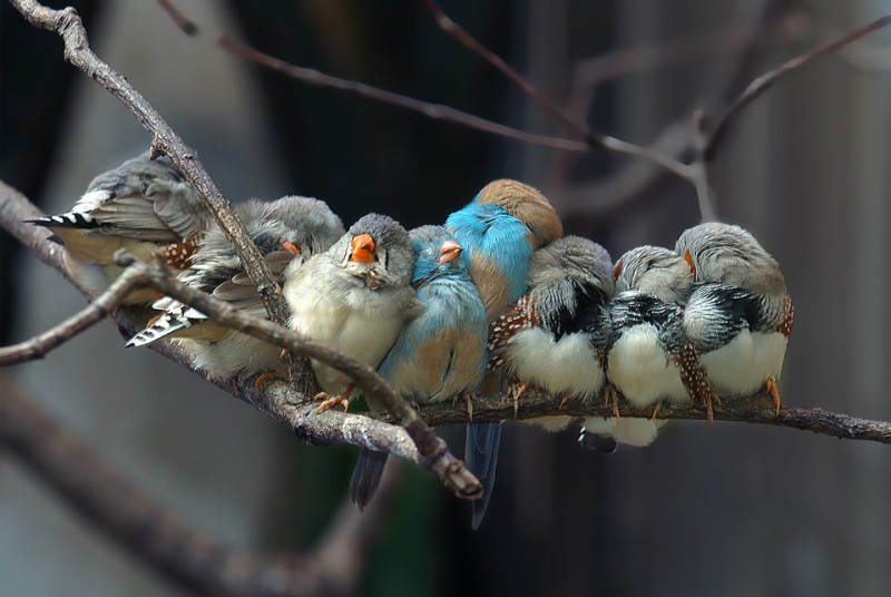 Фотографии птиц