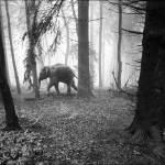 Сюрреалистические фотографии Frank Machalowski