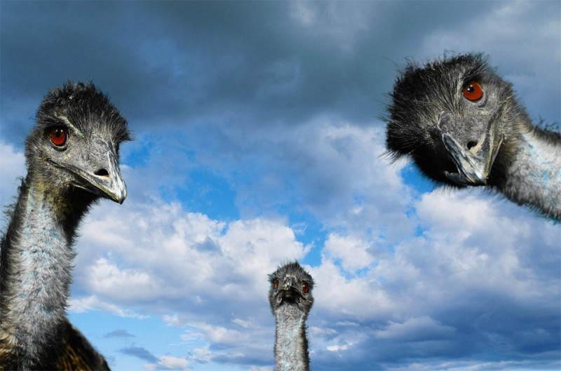 ostrich-look
