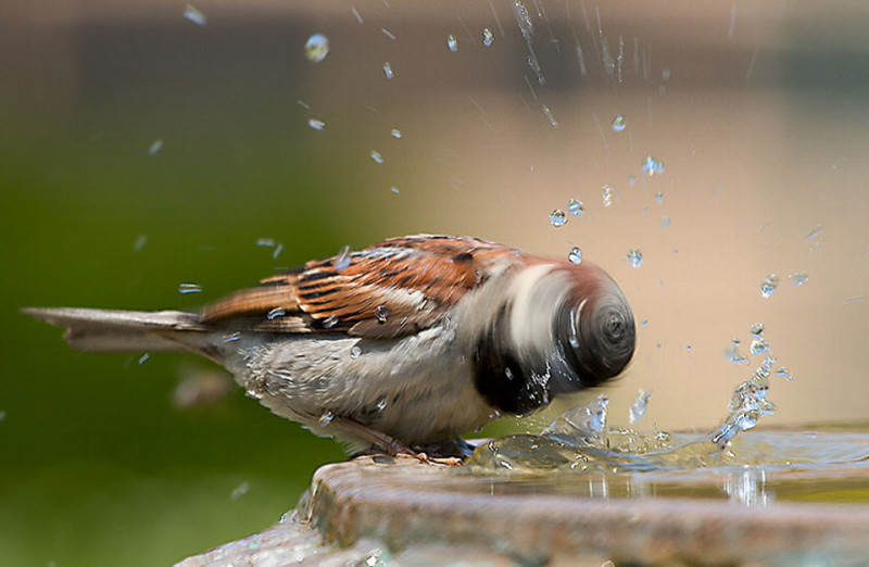 photo-of-sparrow-taken-at-the-right-moment