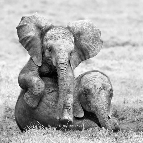 слоненок 2