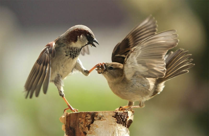 sparrow-shuts-up-his-noisy-friend