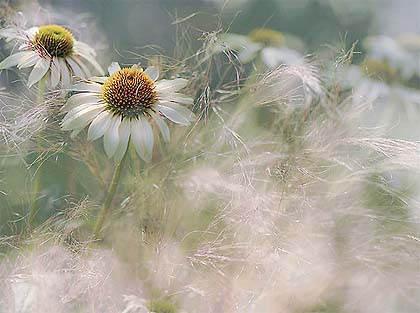 Международный фотоконкурс садоводов