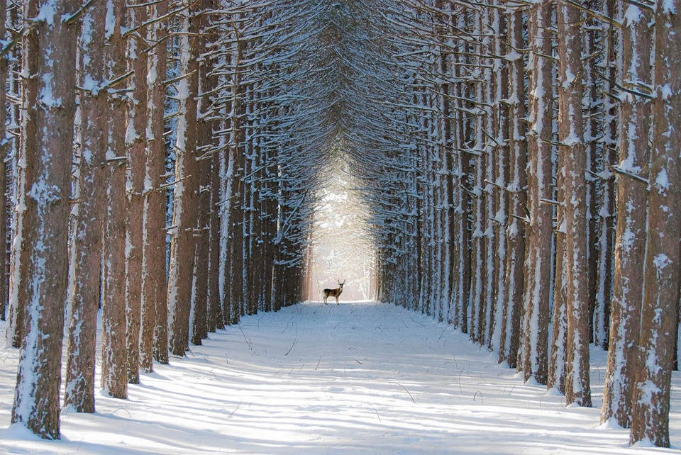Зима в Квебеке, Канада. Фотограф: Жиль Ченеверт (Gilles Chênevert)