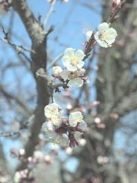 Бледные Цвета