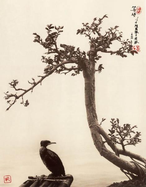 Дон Хонг-Оай 13