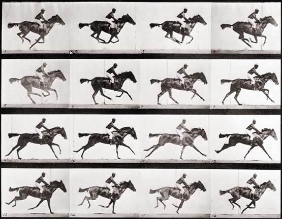 Эдвард Мейбридж Eadweard Muybridge Лошадь в движении 1878 год История в фотографиях