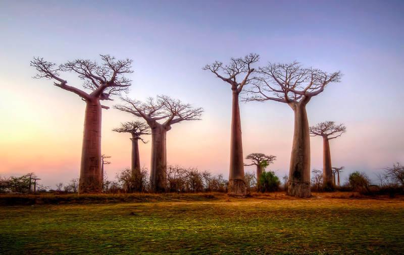 Мадагаскар 32