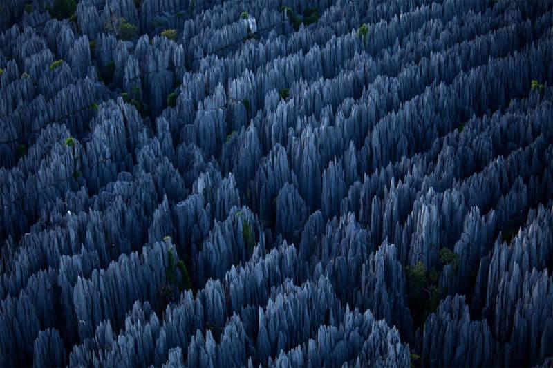 Каменный лес на Мадагаскаре. Фото: Stephen Alvarez
