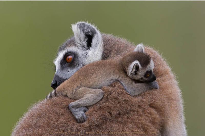 Мадагаскар 41