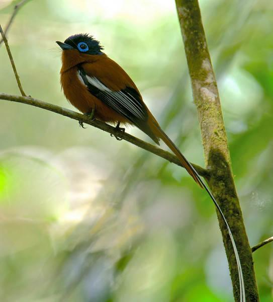 Мадагаскар 7