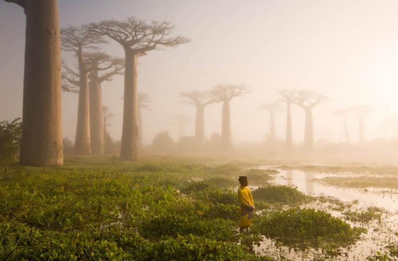 Болота на Мадагаскаре. Фото: Marsel Van Oosten