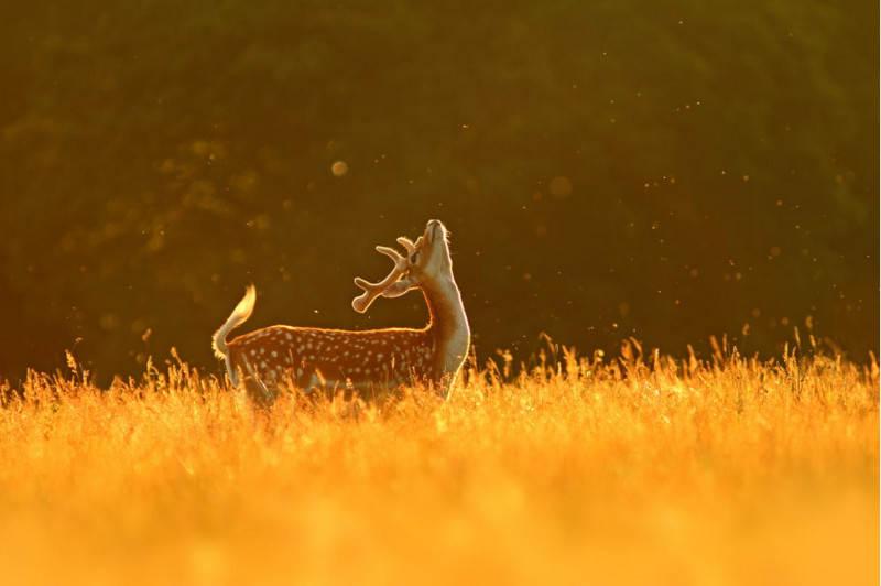Жанры фотографии Дикая природа