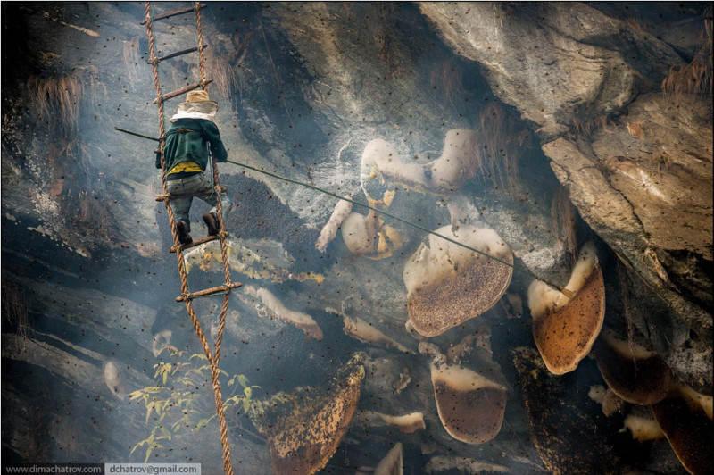 Мужчина пытается добыть мед диких пчел. Фото: Dima Chatrov
