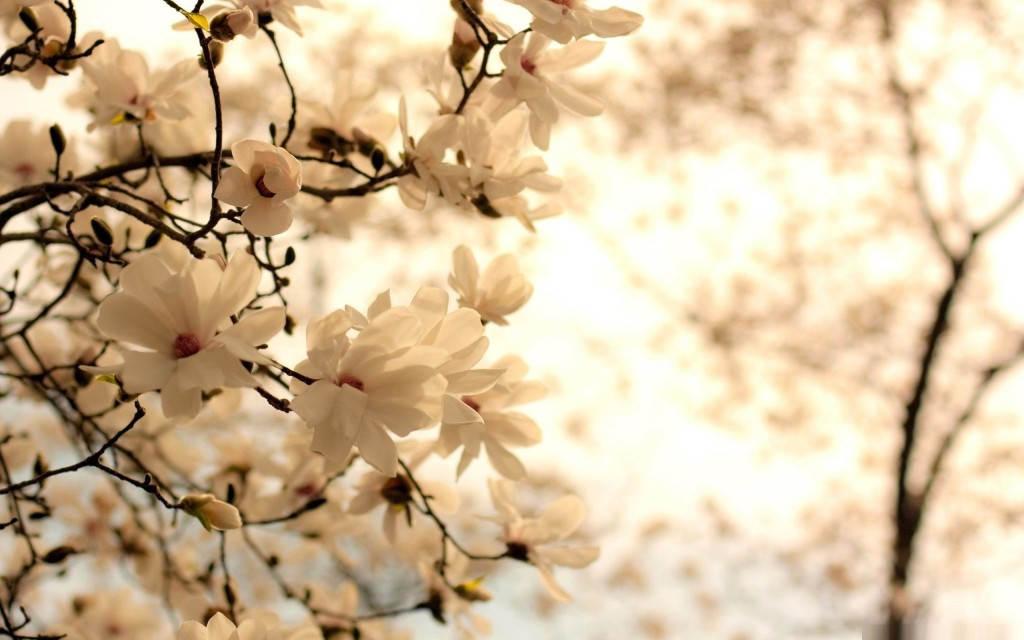 обои весна 2