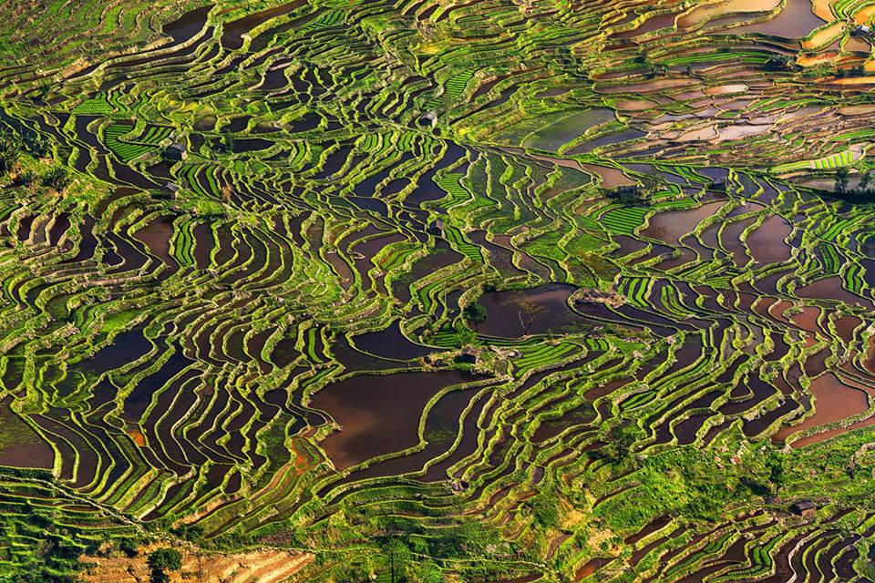рисовое поле Фотографии Китая