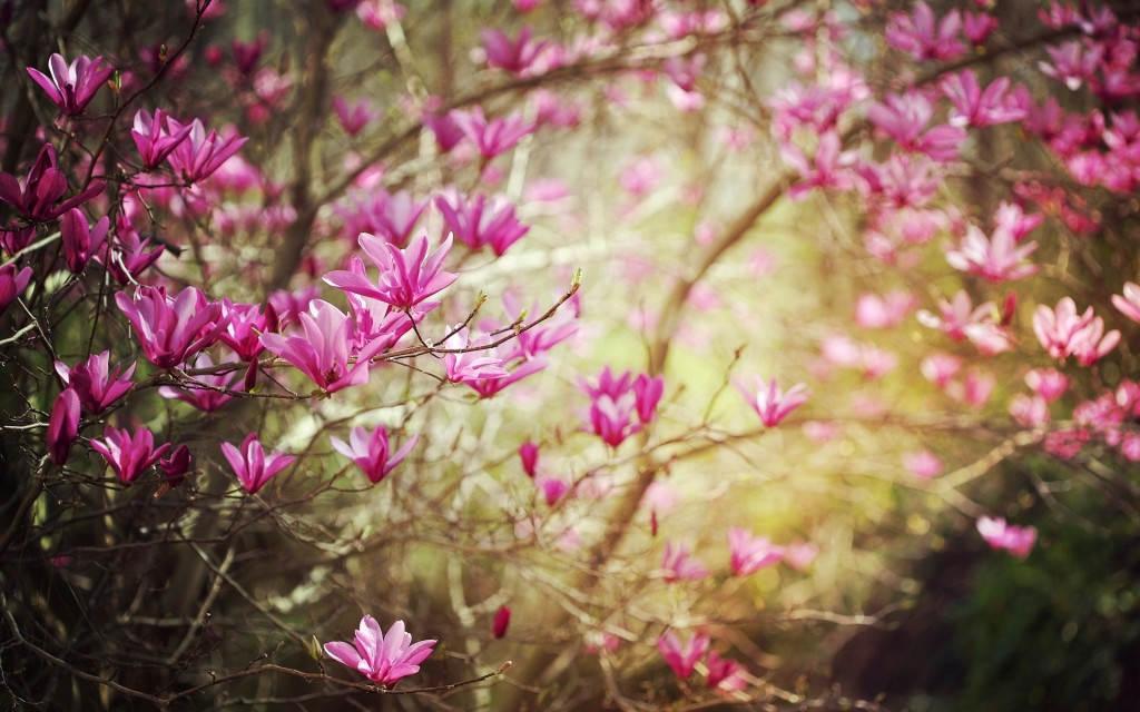 весна обои 3