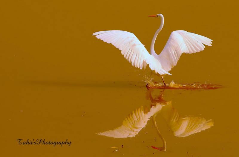 Фото: Tahir Abbas