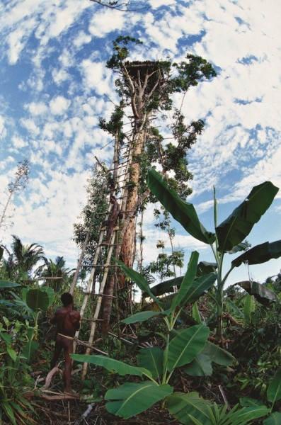 Домик на дереве на юго-западе Ириан-Джая в Индонезии