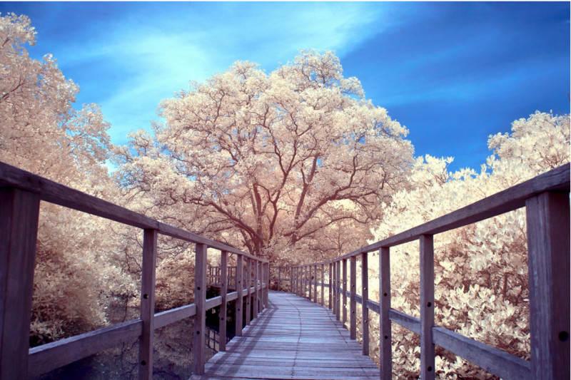 Парк Мангровых деревьев, Индонезия. Фото: vidski23