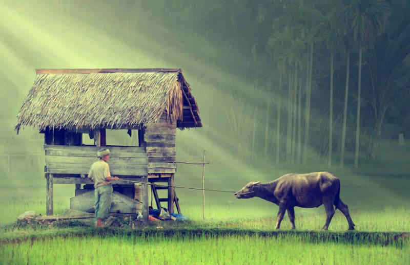 Индонезия 3
