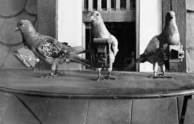 Фотография Юлия Нойброннера (Julius Neubronner), голубей-фотографов, 1903 год