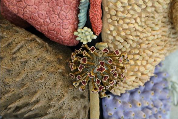 Керамические коралловые рифы Кортни Мэттисон (Courtney Mattison) 2