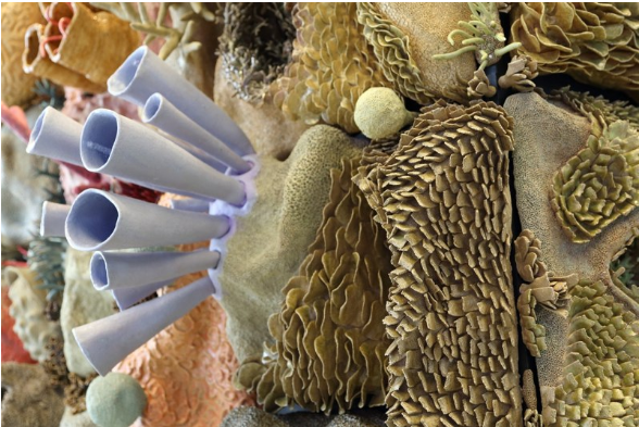 Керамические коралловые рифы Кортни Мэттисон (Courtney Mattison) 4