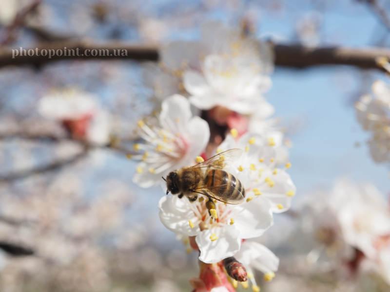 Весенний фотоконкурс от Pashadelic
