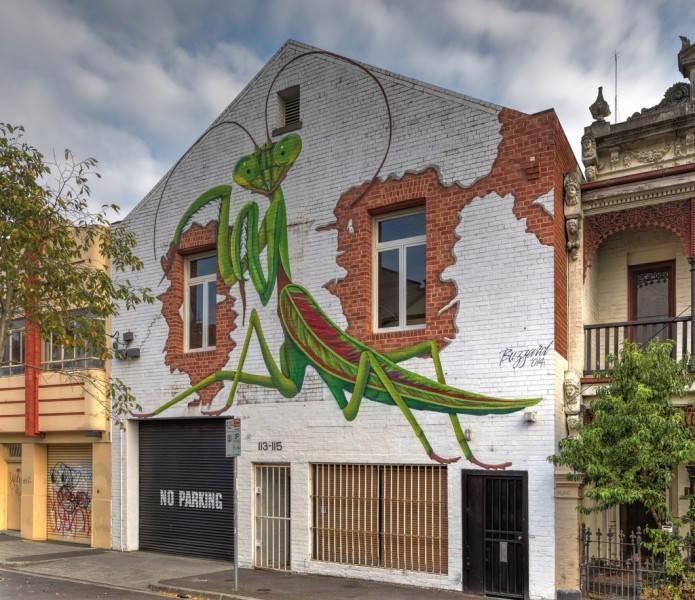 Гигантский богомол на стене в Австралии от Buzzard. Художник:  Buzzard. Фото ajhaysom