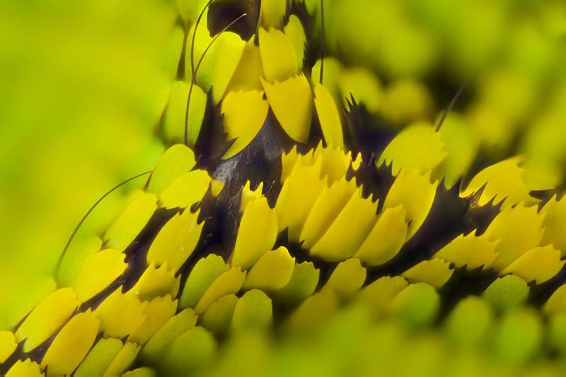 Крылья бабочек с близкого расстояния от Линден Гледхилл Linden Gledhill