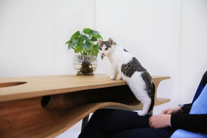 Кошачий стол от фирмы LYCS Стол для котов