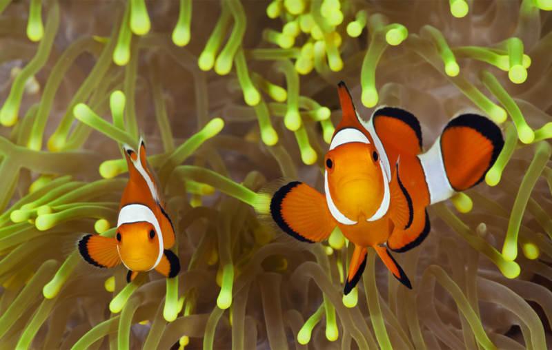 Подводная фотография 3