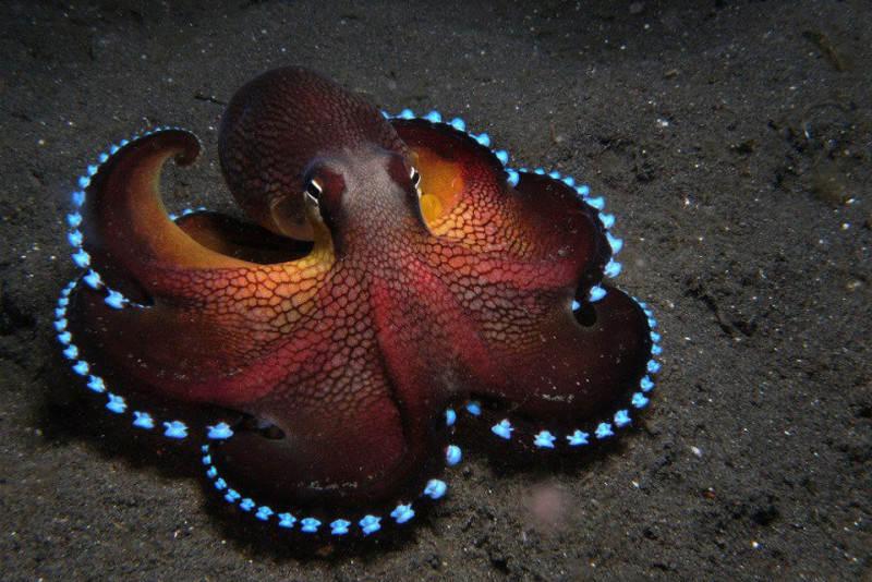 Подводная фотография 6