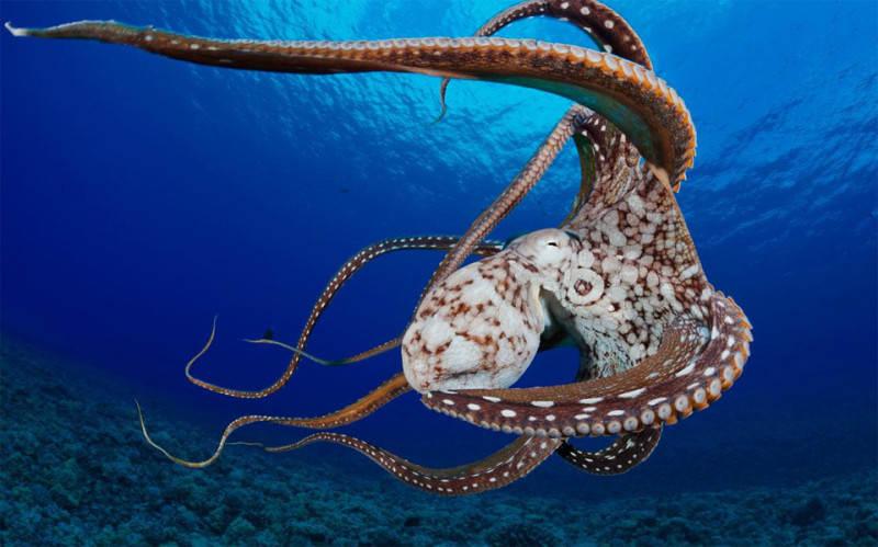 Подводные снимки 2