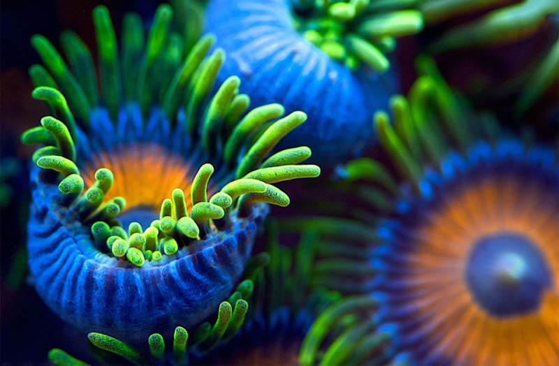 Подводные снимки 3