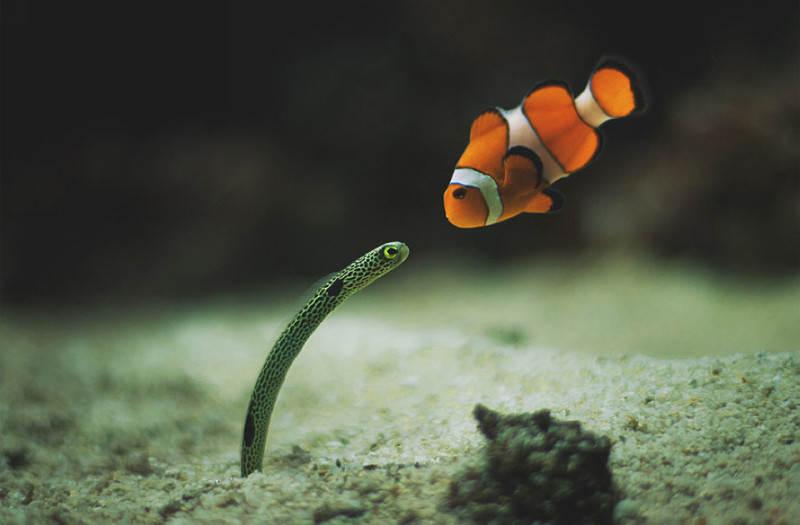 Подводные снимки 6