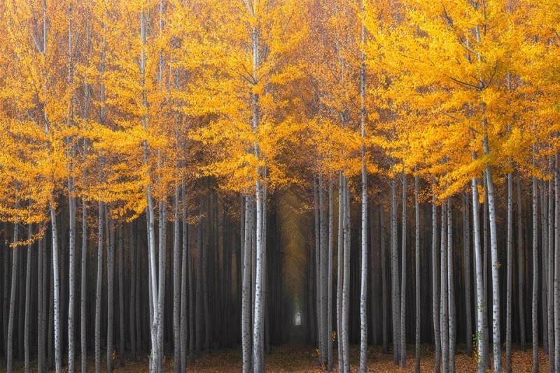 Желтый цвет в фотографии 1