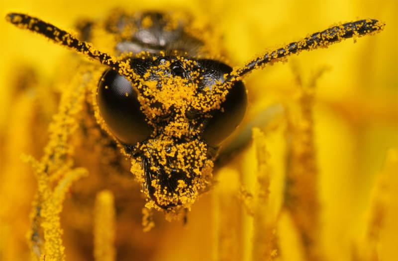 Желтый цвет в фотографии 12